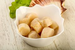 Raw scallops heap. In the bowl ready for cooking Royalty Free Stock Photos