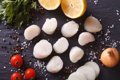 Raw scallops and ingredients for cooking close-up. horizontal to. Raw scallops and ingredients for cooking on a table close-up. Horizontal top view Stock Images