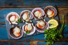 Raw scallops with lemon, cilantro on slate plate, white wine. Seafood. Shellfish. Raw scallops with lemon, cilantro and white wine on black stone slate plate Stock Image
