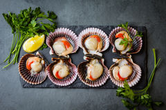 Raw scallops with lemon, cilantro on slate plate, white wine. Seafood. Shellfish. Raw scallops with lemon, cilantro and white wine on black stone slate plate Royalty Free Stock Images