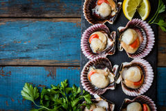 Raw scallops with lemon, cilantro on slate plate, white wine. Seafood. Shellfish. Raw scallops with lemon, cilantro and white wine on black stone slate plate Royalty Free Stock Photography
