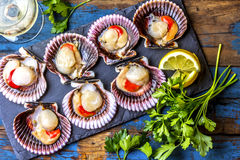 Raw scallops with lemon, cilantro on slate plate, white wine. Seafood. Shellfish. Raw scallops with lemon, cilantro and white wine on black stone slate plate Royalty Free Stock Photos