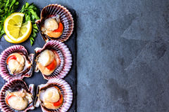 Raw scallops with lemon, cilantro on slate plate, white wine. Seafood. Shellfish. Raw scallops with lemon, cilantro and white wine on black stone slate plate Royalty Free Stock Photo