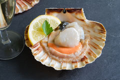 Raw scallops with lemon seafood closeup. Concept Royalty Free Stock Photography
