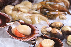 Raw Scallops with Other Seafood on Ice. Raw queen scallops (lat. Aequipecten opercularis) and other seafood such as mussels, shrimps and prawns on ice (Selective Royalty Free Stock Image