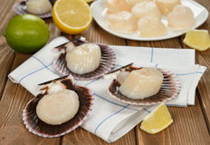 Raw scallops in the shell Royalty Free Stock Photo