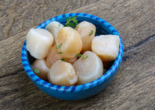 Raw scallops. With thyme - ready for cooking Royalty Free Stock Images