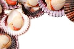 Raw scallops. On white background Stock Photo