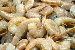 Raw Scampi Stock Image