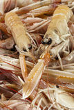 Raw Scampi, large Shrimp. Scampi, large shrimp, type of marine crustacean Royalty Free Stock Image