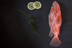 Raw Scorpionfish Royalty Free Stock Photo