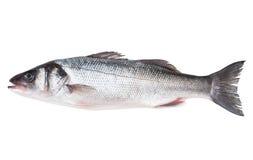 Raw sea bass Royalty Free Stock Photos