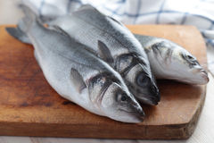 Raw sea bass. On a wooden cutting board Royalty Free Stock Photos