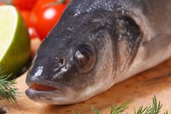 Raw sea bass fish with vegetables close-up front view. Raw sea bass fish on cutting board with vegetables close-up horizontal. front view Royalty Free Stock Images
