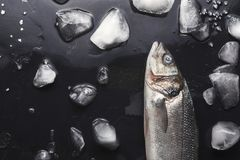 Fresh sea bass at black background. Raw sea bass with ice at black background. Minimalistic mokeup for seafood restaurant or fish market. Top view, copy space royalty free stock photo