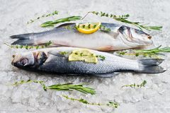 Raw sea bass on ice with rosemary, thyme and lemon. Gray background, top view. royalty free stock image