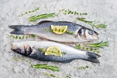 Raw sea bass on ice with rosemary, thyme and lemon. Gray background, top view. stock photography