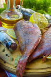 Raw sea bass. Ready for healthy cooking Royalty Free Stock Images