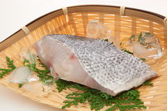Raw sea bass. A slice of raw sea bass on the colander. Sea bass fish that name changes as it grows up royalty free stock image