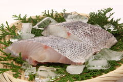 Raw sea bass. Tow slices of raw sea bass on the colander. Sea bass fish that name changes as it grows up Stock Photo