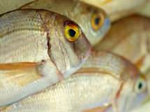 Raw Sea Bream Royalty Free Stock Images