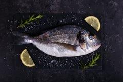 Raw sea bream fish Stock Photos