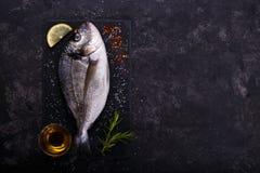 Raw sea bream fish Royalty Free Stock Photos