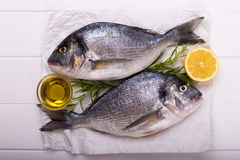 Raw sea bream fish Stock Images