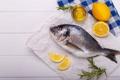 Raw sea bream fish Stock Image
