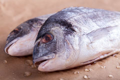 Raw Sea Bream Stock Photo