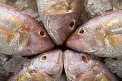 Raw Sea bream fish on metal background, top view Royalty Free Stock Photos