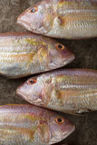 Raw Sea bream fish on metal background, top view Stock Photo
