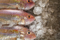 Raw Sea bream fish on metal background, top view Stock Photography