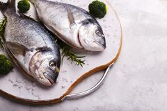 Raw sea bream fish Royalty Free Stock Images