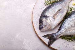 Raw sea bream fish Stock Photo