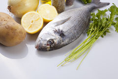 Raw sea bream fish with some ingredients. Over white background Stock Image