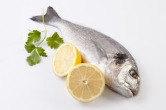 Raw sea bream fish with some ingredients Stock Image
