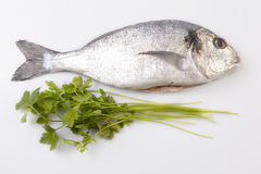 Raw sea bream fish with some ingredients Royalty Free Stock Image