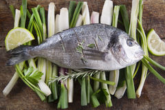 Raw sea bream Stock Photos