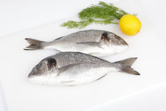 Raw sea breams with lemon and dill royalty free stock images