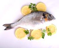 Raw sea fish Royalty Free Stock Images