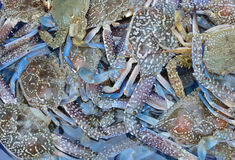 Raw sea food. Close up of raw sea food Royalty Free Stock Images