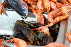 Raw sea foods at kitchen sink Stock Photos