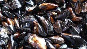 Raw sea mussels rotating stock video