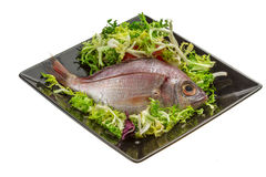 Raw Sea Perch. Isolated on the white background Stock Photo