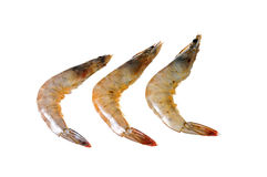 Raw sea prawn Stock Image