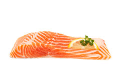 Raw sea trout fillet Stock Images