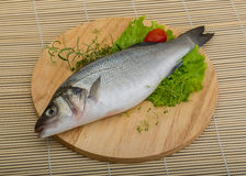 Raw seabass Stock Images