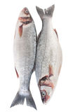 Raw Seabass Fish Isolated Stock Images