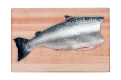 Raw seabass fish on the wooden board royalty free stock image